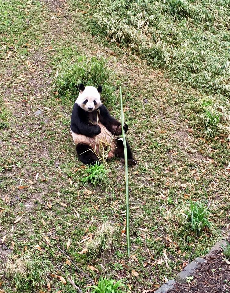 Panda breakfast time :)