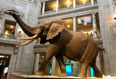 At the Smithsonian National Museum of Natural History