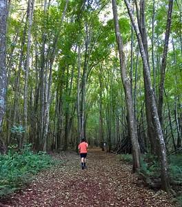 Makawao Forest Reserve Run
