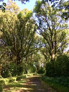 Walking in Nahiku