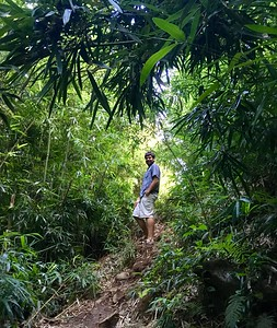 Road to Hana Walk in the Bamboo.
