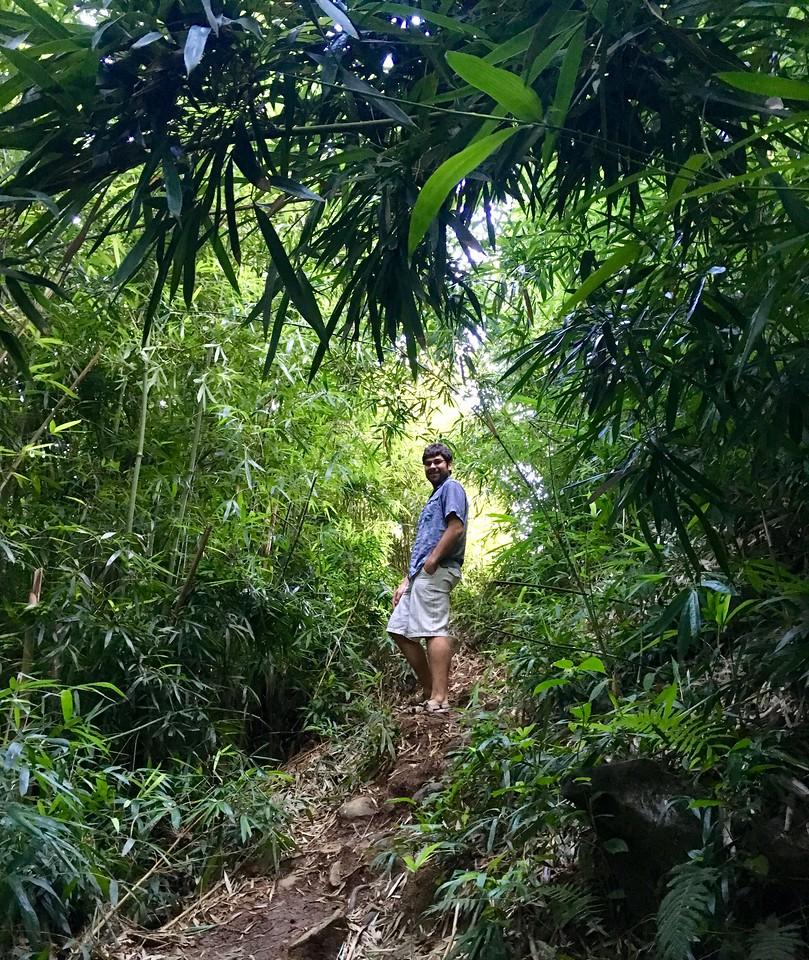 Road to Hana Walk in the Bamboo.