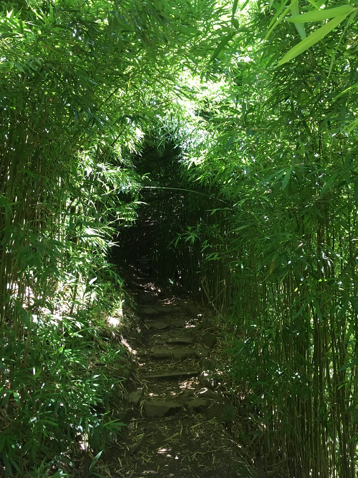 Bamboo Forest on Pipiwai Trail