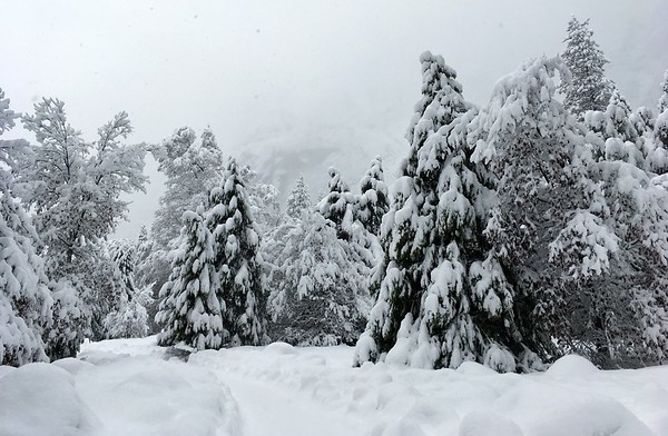 Snow covered wonderland...