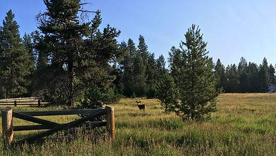 Meeting a morning deer in La Pine