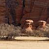 Zion Mushroom Rocks