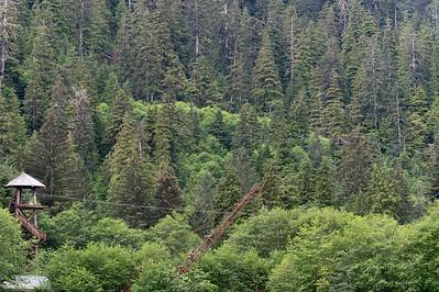 Zipline through the tall trees at Alaska Canopy Adventures