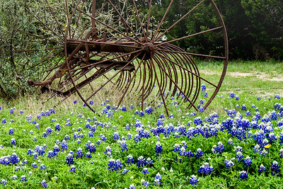 A Rake in the Bluebonnets