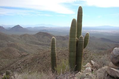 2012 26/27 janv Saguaro NP (Tucson)