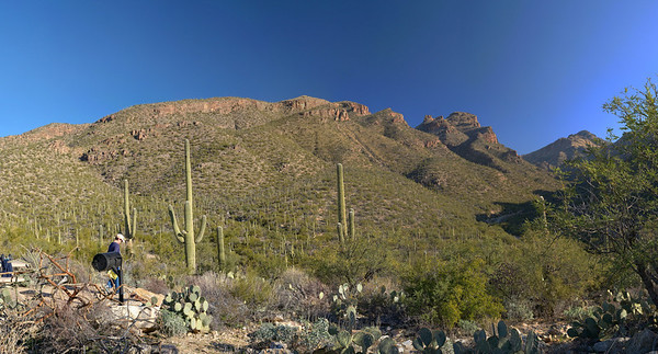 Hike:      Sabino Canyon is very rugged and beautiful! This is a very easy and popular hike to the incredible Seven Falls. There are exactly 7 stream crossings on the way to Seven Falls.      We will take the wide trail off the southeast side of the parking lot. When you reach the road bear right. Once you reach the end of the road, you'll spot the rest rooms and tram stop. The beginning of the Bear Canyon Trail is just to the left of the rest room. It's nearly 2 miles from the parking lot to the trail's beginning and then another 2 miles to reach Seven Falls.      At most of the crossing points, the footing is stable. For those times when there is a lot of water running in the creek, it can be more challenging. You reach the seventh crossing after about 35 to 45 minutes. The seventh crossing is the hardest when the water is up. But it is usually possible. After this seventh crossing, the trail climbs up the south wall of the canyon on a couple of long switchbacks, and then heads up-canyon, gently ascending. After you round a corner, you see the rock formation that towers over Seven Falls ahead.      About 20 minutes after the seventh crossing you are directly opposite Seven Falls, which is a gorge on the north wall of Bear Canyon with a series of small waterfalls and pools. The trail forks here, with the left-hand fork taking you down to a large pool at the base of Seven Falls and the right hand fork continuing up Bear Canyon. There is a forest service sign indicating that the Bear Canyon Trail continues on the right-hand fork. Seven Falls has a number of large pools. It's a great place to hang out. Best Time of Year to Hike: fall through spring Distance: 8.2 miles round trip Range of Elevation: 2700' (Sabino Canyon) to 3360' (Seven Falls) Difficulty: Moderate Drive: Take I-10 south to Tucson to Orange Grove Rd. Exit, go left on Orange Grove Rd. Orange Grove Rd. to Skyline Drive, right on Skyline Dr. Skyline Dr. to Sabino Canyon Rd. Sabino Canyon Park Recreation area will be right in front of you, take a left onto Sabino Canyon Rd. and an immediate right into the parking lot.