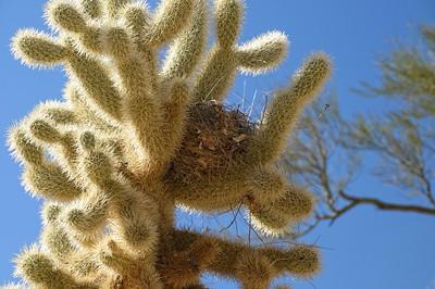 2012 28 janv Sabino Canyon (Tucson)