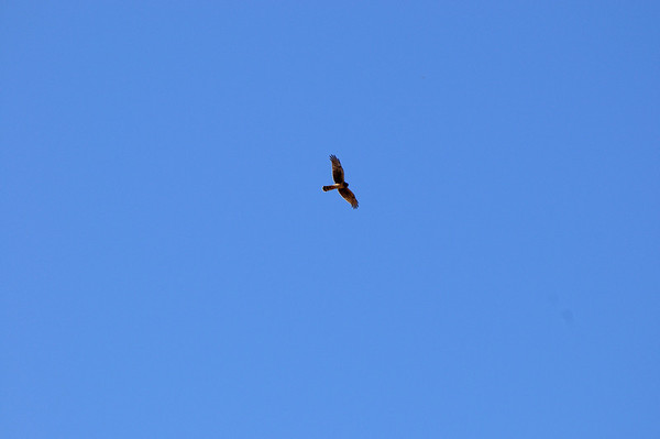 La promenade est réputée pour le birding, on voit deux malheureux faucons