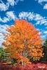 Fall_D718370