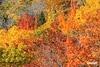 Fall_D718297