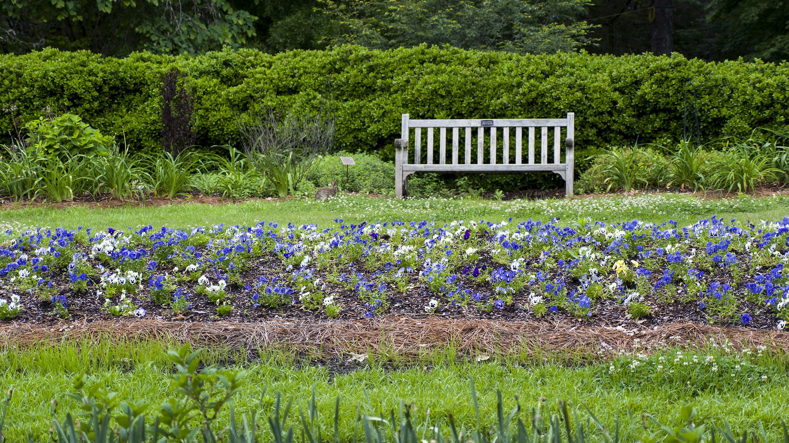 Huntsville Botanical Garden: A Tranquil Retreat in Huntsville, Alabama
