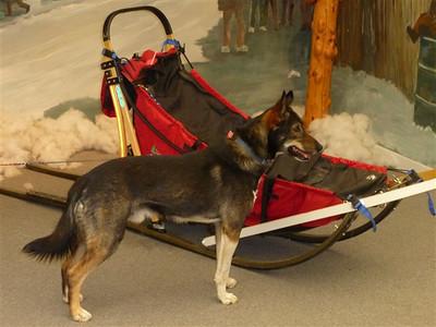 Lance Mackey - Alaska Dog Musher