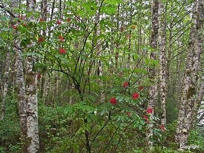 forestandredberries