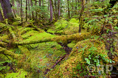 MOSS AND STREAM