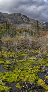 Denali Hwy Cantwell Viewpoint Alaska Panoramic Landscape Photography Island Fine Art Posters - 020303 - 09-09-2016 - 7611x14511 Pixel