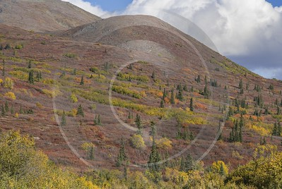 Denali Hwy Cantwell Viewpoint Alaska Panoramic Landscape Photography Fine Art Posters - 020423 - 09-09-2016 - 11009x7389 Pixel