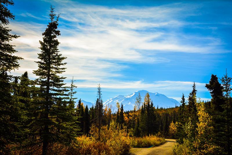 denali national park in fall