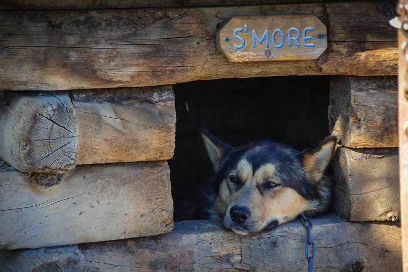 denali dog sledding kennels