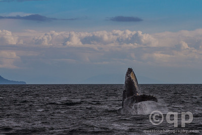 HUMPBACK WHALE AND CLOUDS
