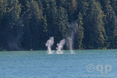 TRIPLE HUMPBACK BLOW