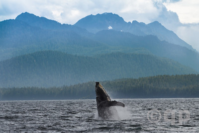 HUMPBACK WHALE AND MOUNTAINS