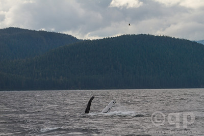 HUMPBACK WHALE PECTORAL FIN WAVE GOODBYE