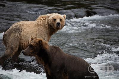 BLONDE BEAR