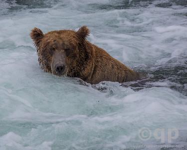 WHIRLPOOL BEAR