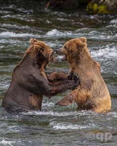BEAR PUSH