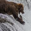 BEAR SCOOP