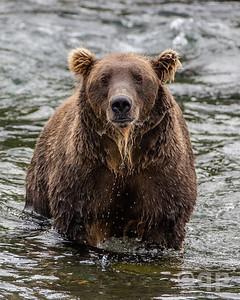 VERY WET BEAR