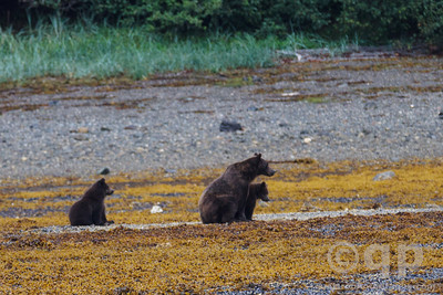 SITTING BEARS