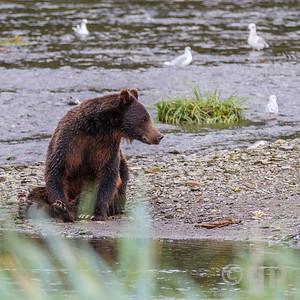 SITTING BEAR 2