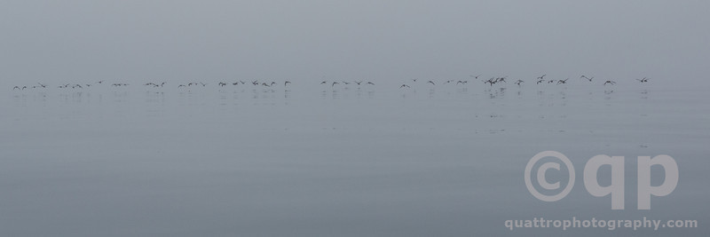 BIRDS IN FOG