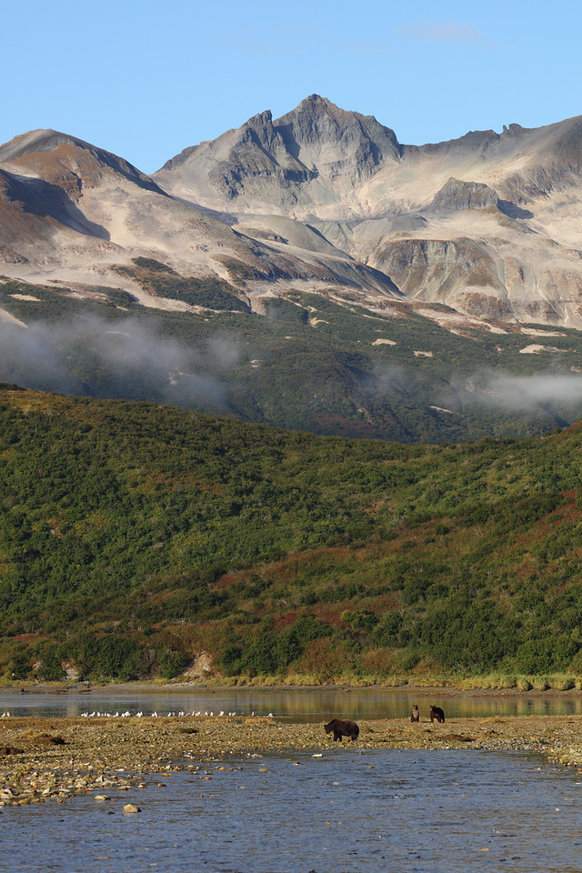 Brown Bears and Epic Katmai National Park Landscape