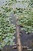 trunkandwaterlilly