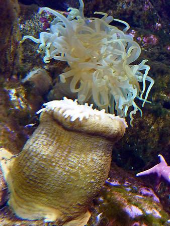 Seward SeaLife Center