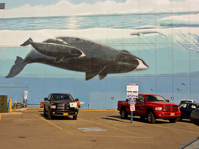 Wyland Whale Mural