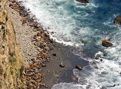 Anacapa Island - Sea lions