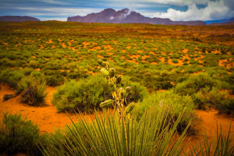 horseshoe bend hike arizona