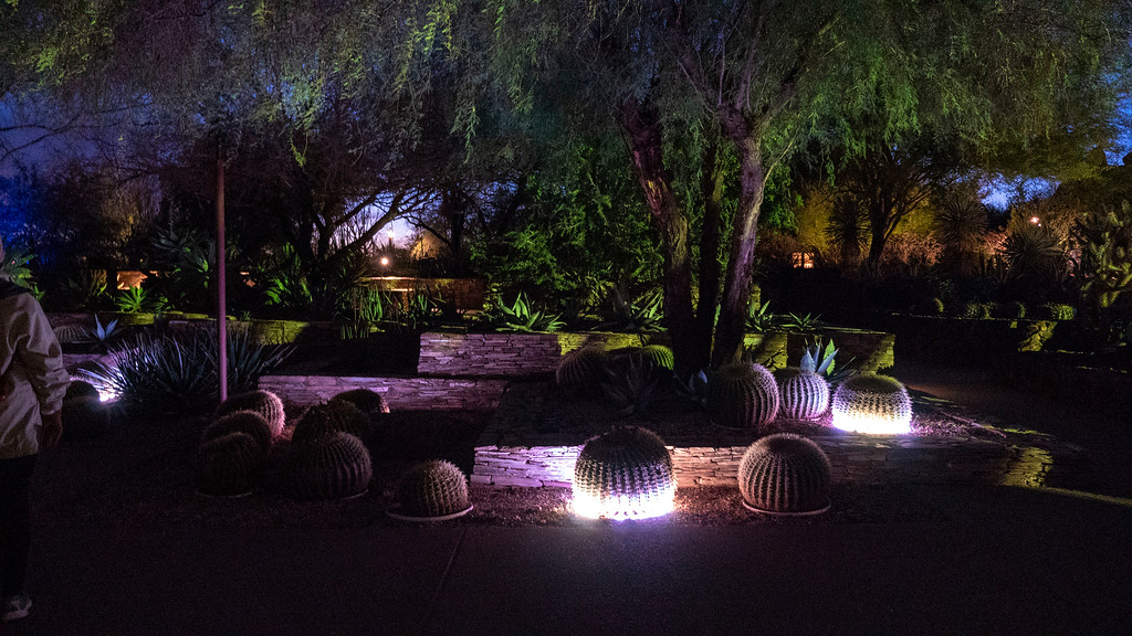Things to do in Tempe AZ: Electric Desert at Electric Botanical Garden
