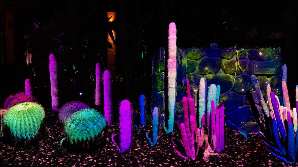 Things to do in Tempe AZ: Electric Desert - Desert Botanical Garden