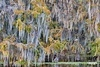 LakeMartinFall_DSC4491