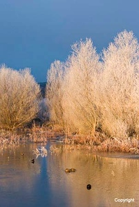 Sunrise_Pond_0213