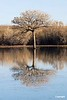 TreeReflections_D306722