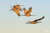 Cranesflying_D306845